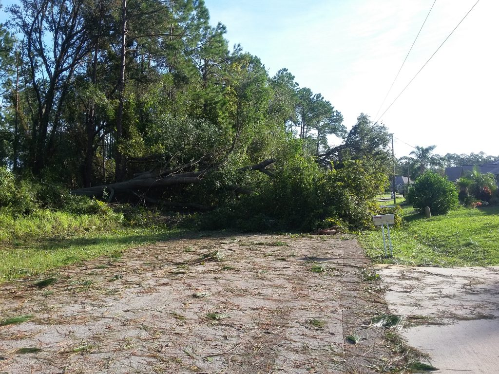 FL Hurricane Tree Damage